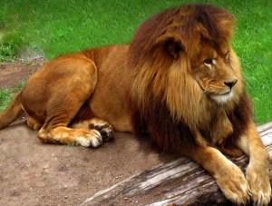 Lion or Lamb? You Decide…